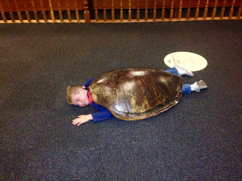 Playing sea turtle at the Otago Museum